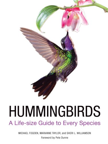 Hummingbirds: A Guide to Every Species by Marianne Taylor